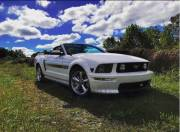 2008 California Special Mustang GT Cover